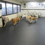 dog daycare mclean va