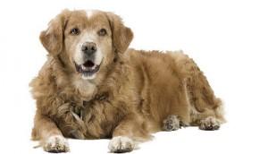 k9 dog
