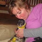 special needs pet